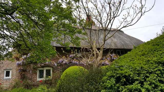 Thatched Roof1